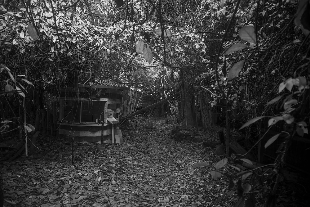 A ticket booth hidden amongst dead leaves and vines found while urbexing in Jungle Park in Japan. Photographed by Megan Kennedy