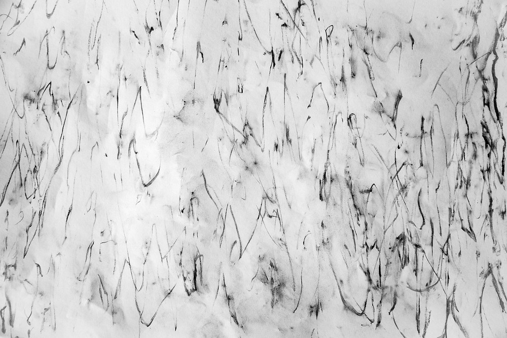 Abstract black charcoal markings mark a white canvas, the manifestations of taking rubbings from a gum tree. Photograph and work by Megan Kennedy.