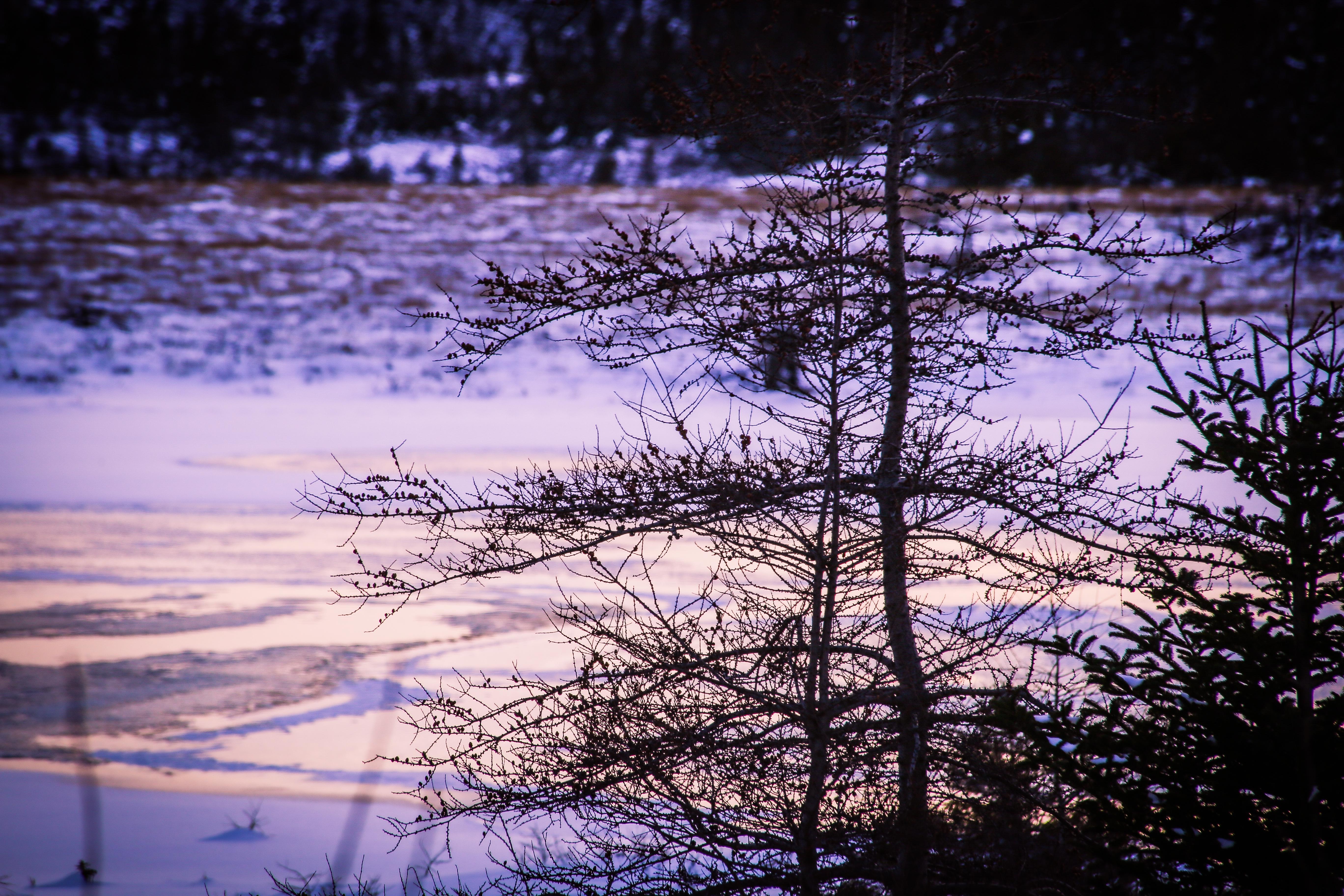 Ocean Pond Ice