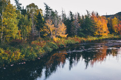 Fall Trees and River, Clarenville