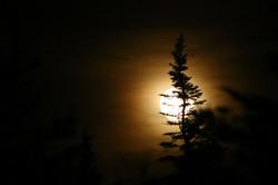 Kilbride Moon and Tree
