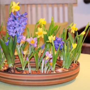 Blumenkranz 1