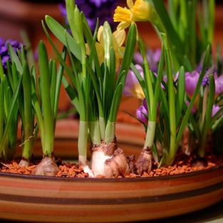 Blumenkranz 2