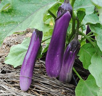 Compotée d'aubergines