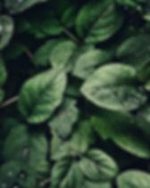 4k-wallpaper-close-up-dew-807598-1.jpg