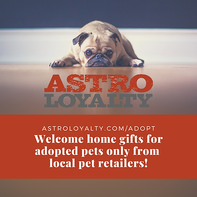 Sharing the Love with Animal Shelters and Pet Foster Parents