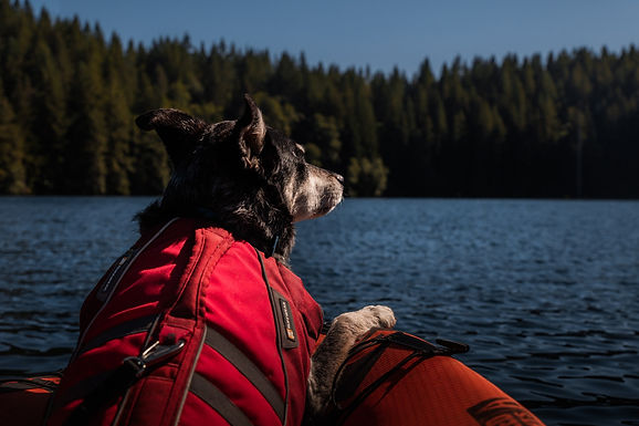 How to Get Outdoors with Your Dog During A Quarantine