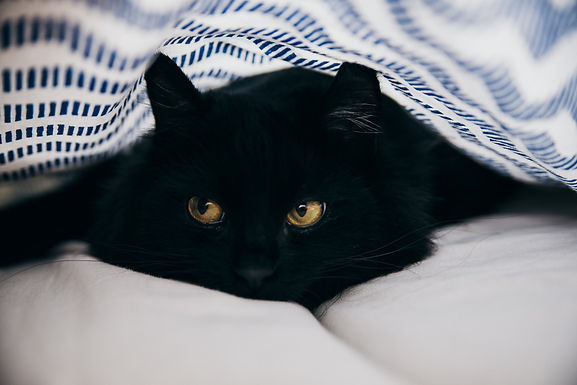 Happy National Black Cat Appreciation Day!