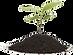 plant-transparent-png.png