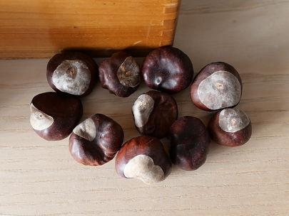 marrons secs 20094406.JPG