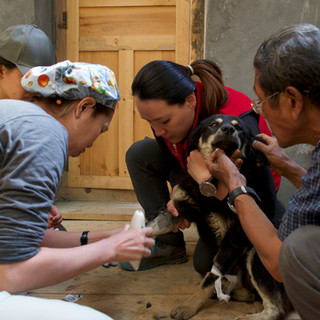 Veterinary volunteers