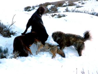 Dog health impacts people and wildlife