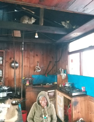 Cats shelter in the roof