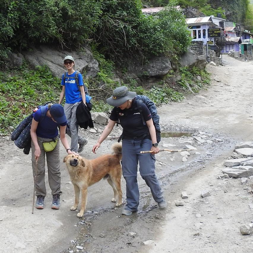 #9 The happy doggie