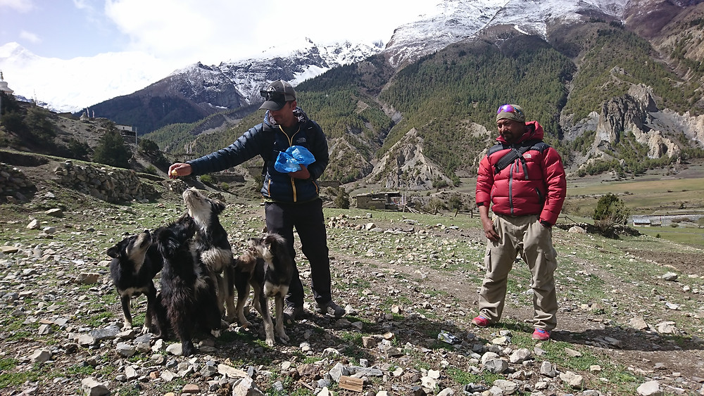Ajay Narsingh Rana (left) and Mukhiya Gotame rounds up a group of young pups in Bhraka village