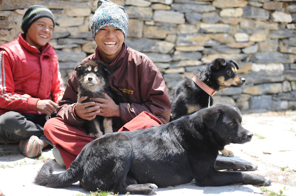 Our pilot neutering and anti-rabies vaccination efforts is the first in Nepal's Himalaya.