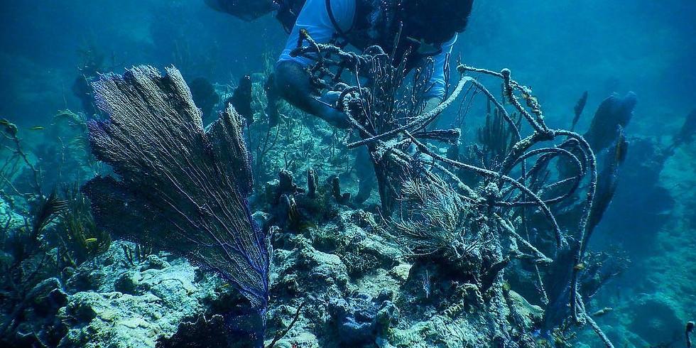 DEEP Clean: Dive Against Debris