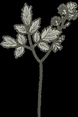 Botany%2520%2520_edited_edited.png