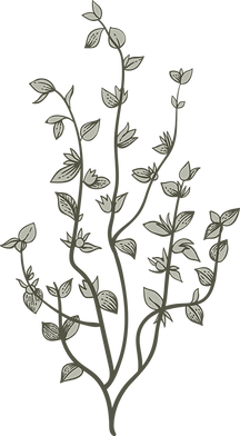 Botany%20%20%20%20%20_edited.png