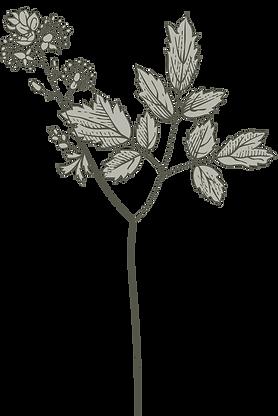 Botany%20%20_edited.png
