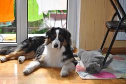 Monty z Felkiem