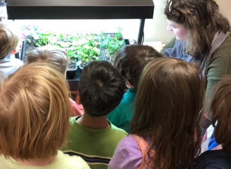 Tiny Garden, HUGE Impact: Indoor Gardening in the Classroom
