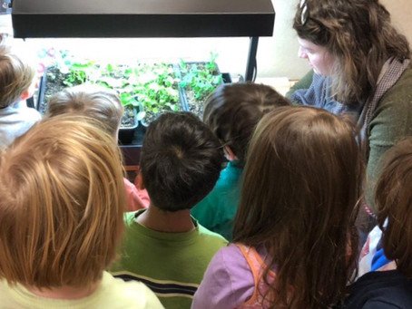 Tiny Garden, HUGE Impact: Indoor Gardening in the Classroom