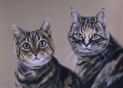 Cassie and Saffie