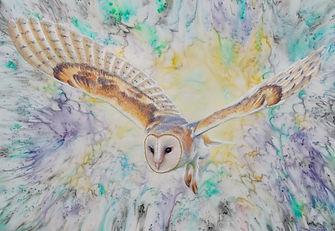 Barn Owl pastel web_edited.jpg