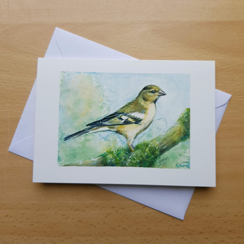 In Honour of the Female Chaffinch