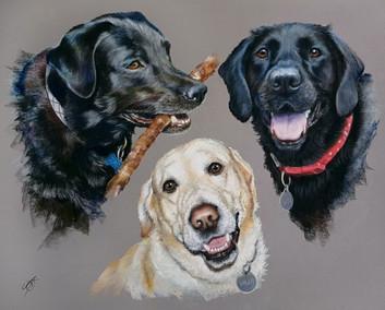 Zac, Bailey and Sisi