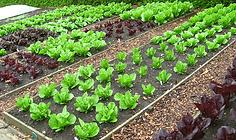 organic-garden.png
