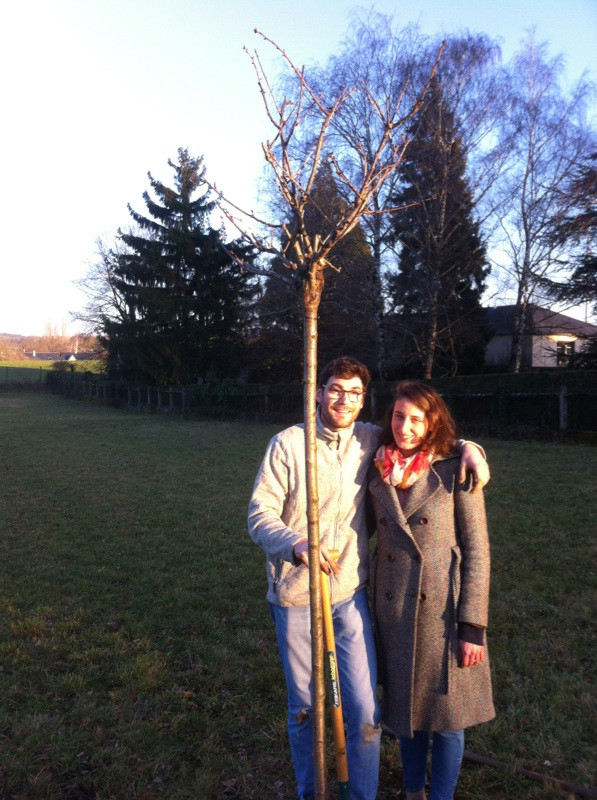 Plantation d'un Prunus serrulata 'Shirotae', cadeau d'Aurélie pour mes 26 ans.