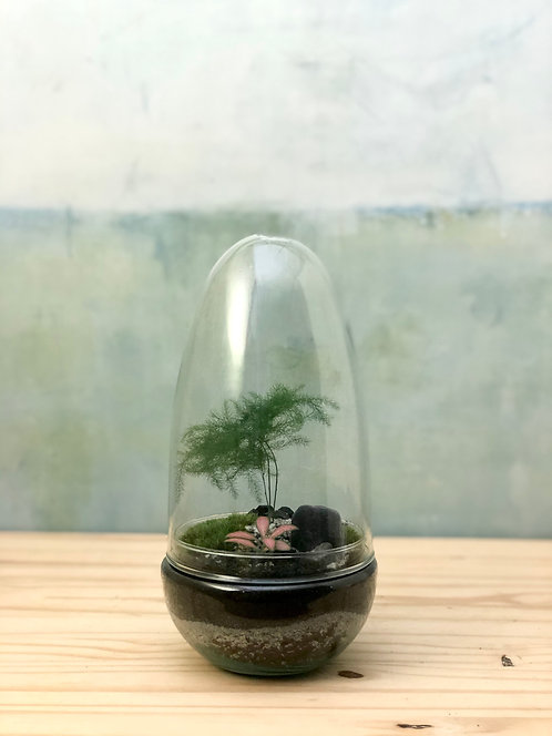 Dôme de vert - asparagus