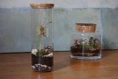 terrariums MATTIM créations