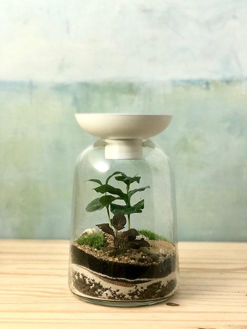 Bougeoir Végétal - coffea