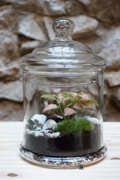 terrarium bonbonnière MATTIM créations