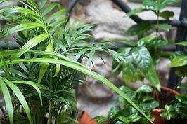 plantes MATTIM créations