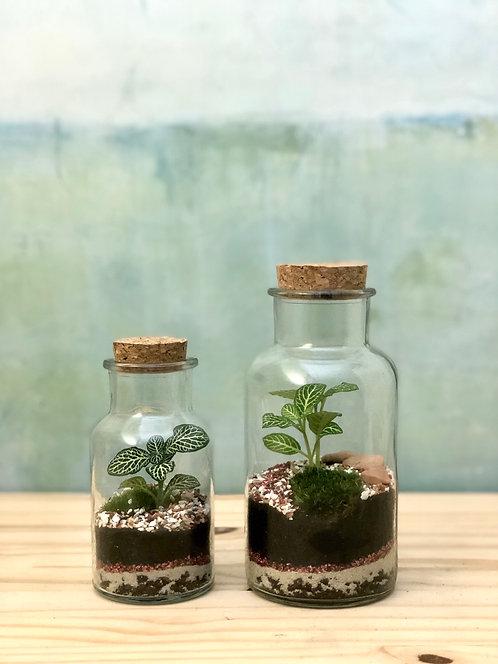 Elixir Végétal - fittonia