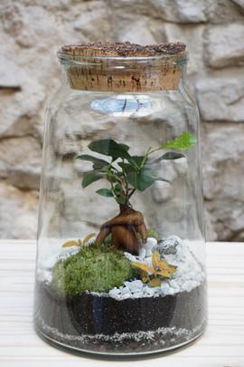 terrarium MATTIM créations