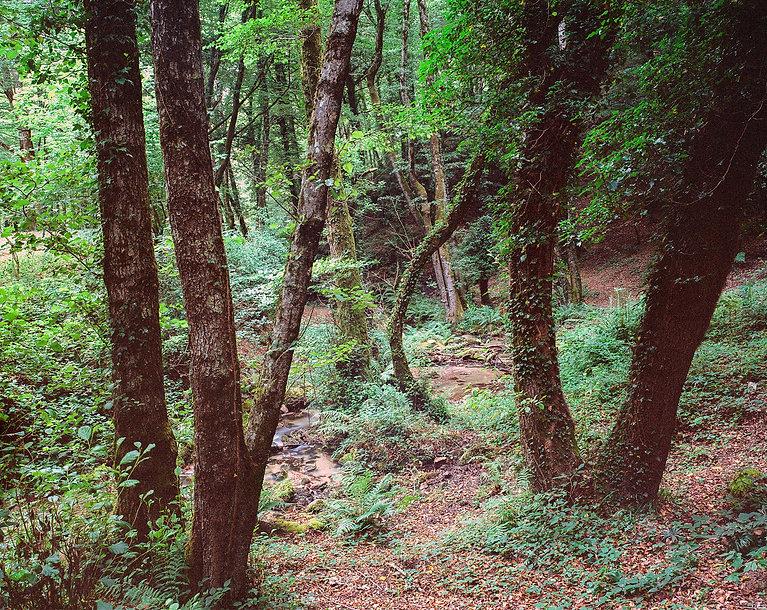 Hanspeter Gass Landscape Landschaft Fine Art Analog Analogue Wald Fotografie Photography