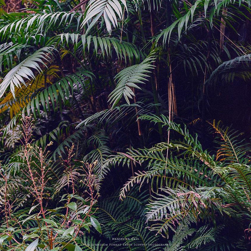 Hanspeter Gass Nature Photography Natur Fotografie Analog Fine Art Grün