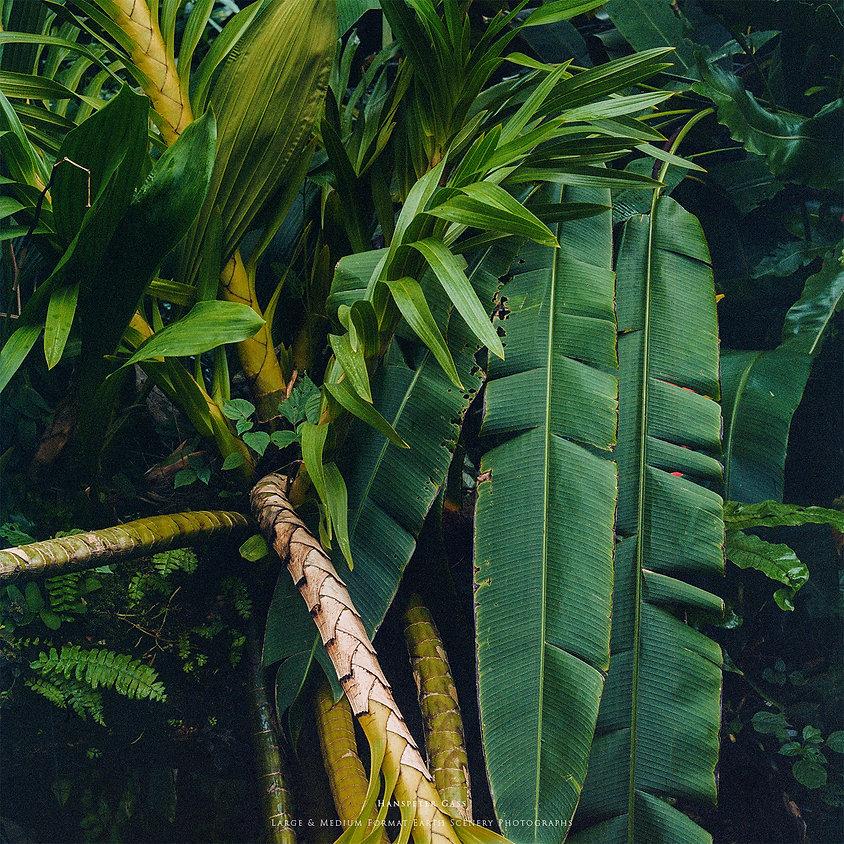 Hanspeter Gass Nature Photography Natur Fotografie Analog Fine Art Grün Green