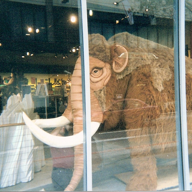 Woolly Mammoth Display