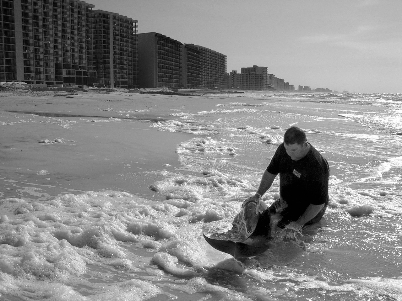 Dolphin Rescue on the Beach AL