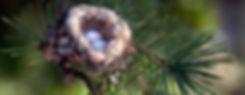 Colibri nest
