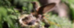 Colibri family in cedar tree