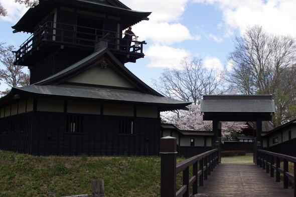 逆井城(さかさいじょう)の桜