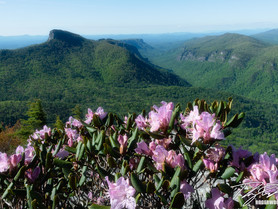 Linville Gorge Wilderness: What You Need To Know...