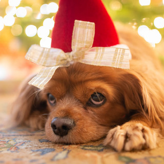 Christmas Puppy Promotion...